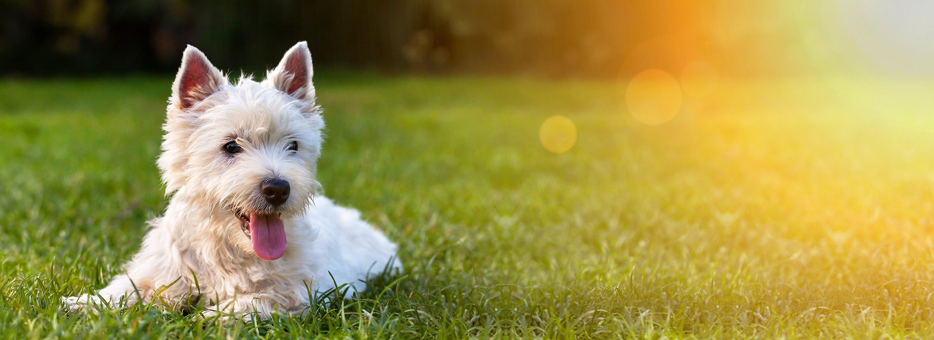 Adrian Home and Pet Sitter: Pet Services   Adrian, Tecumseh